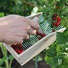 Beerenpflücker aus Buchenholz