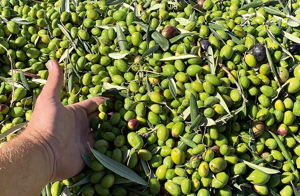 6 kg Oliven = 1 Liter Öl